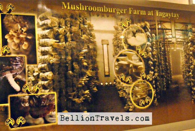 Mushroom Burger 2.jpg