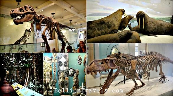 natural-museum1