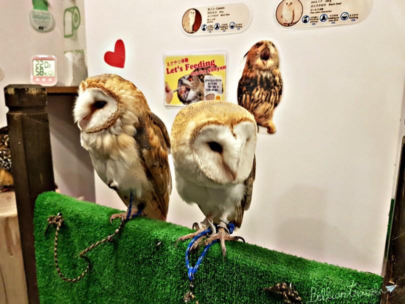 Owl(7)