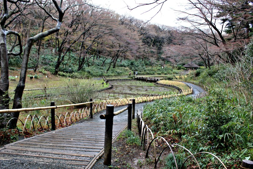 Japan (5).jpg