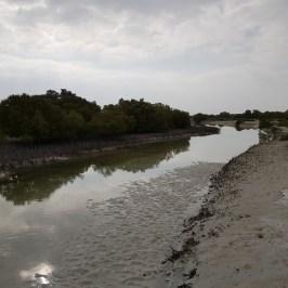 Mangrove_11