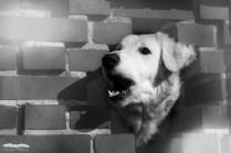 Mauerhund ;)