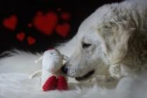 Schafschützer
