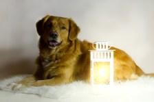 Laternenhund