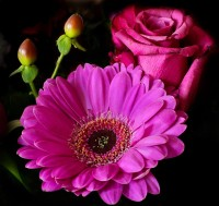 flower-344109_640