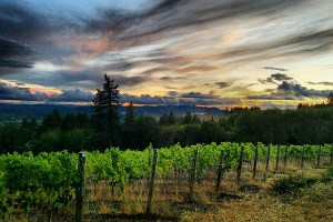 Herald the Holidays: Pre-Thanksgiving Open House Weekend at Bells Up @ Bells Up Winery | Newberg | Oregon | United States