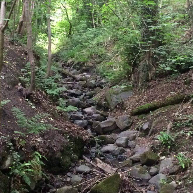 Stream through the glen