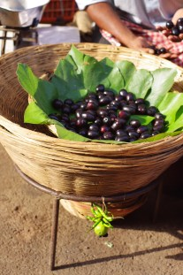 Seasonal Fruit - Kala Jamun (Black Plum)