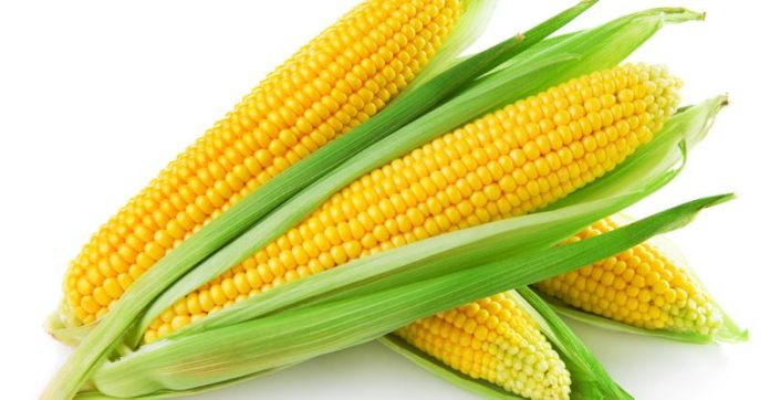 Corn VS. Maize - Learn the Distinct Differences Between Corn and Maize