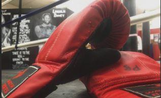 boxer-Wag Magazine
