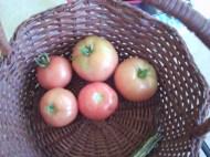Mon. -- tomatoes