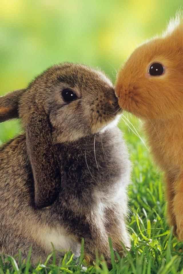 Bunny dating