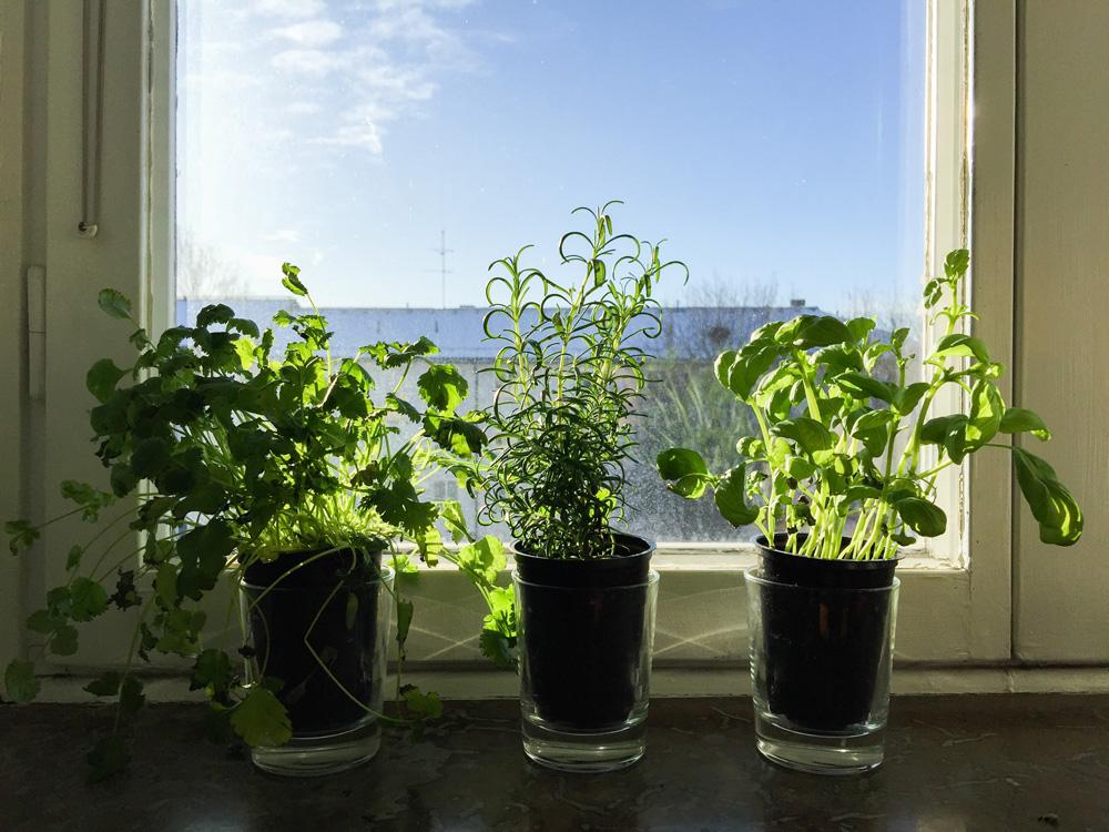 herbs-window