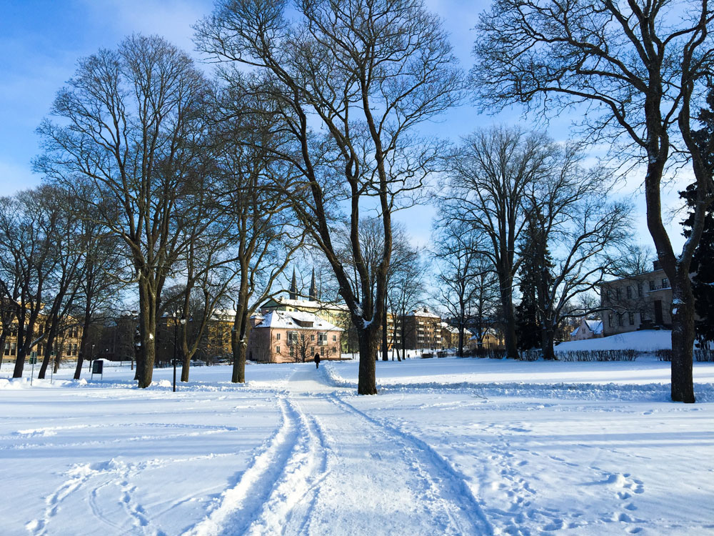 park-and-snow
