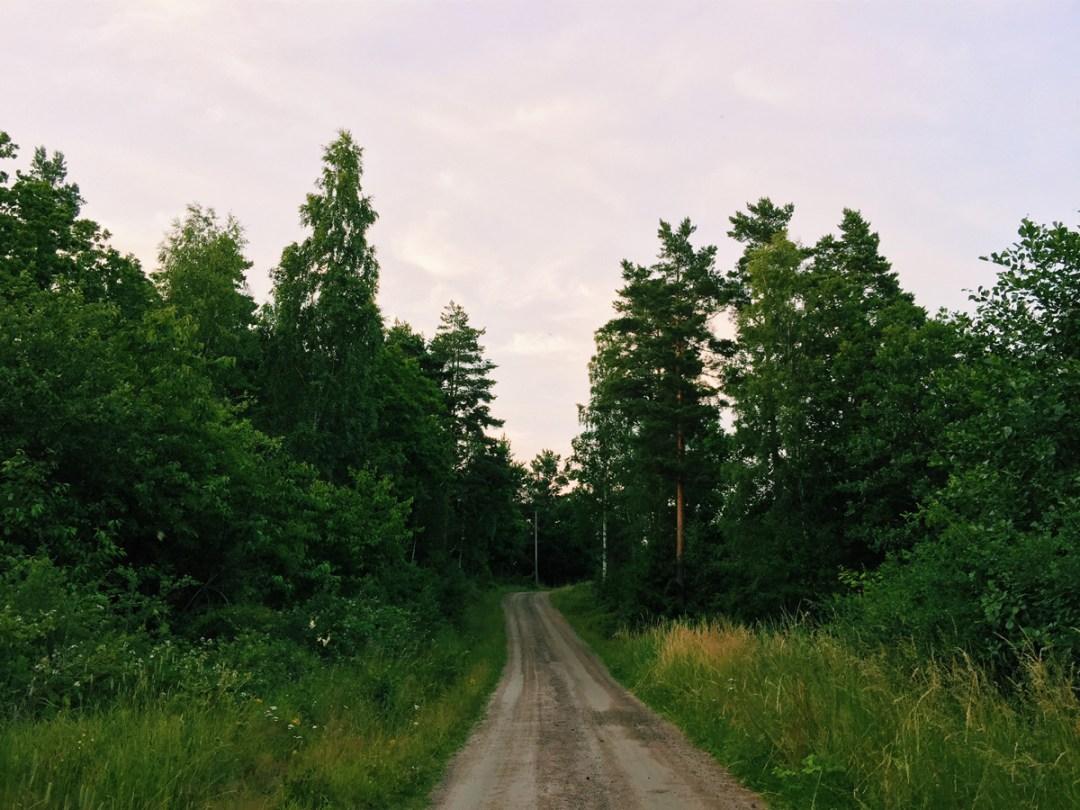 path-trees-skeppsgarden