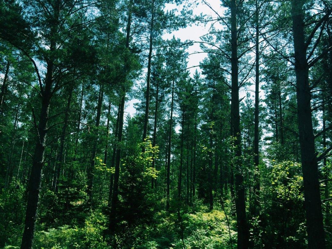 trees-forest-skeppsgarden