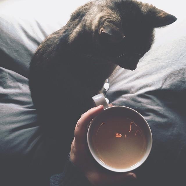 zola coffee blankets