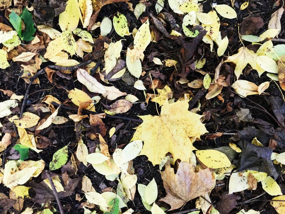leaves-fall