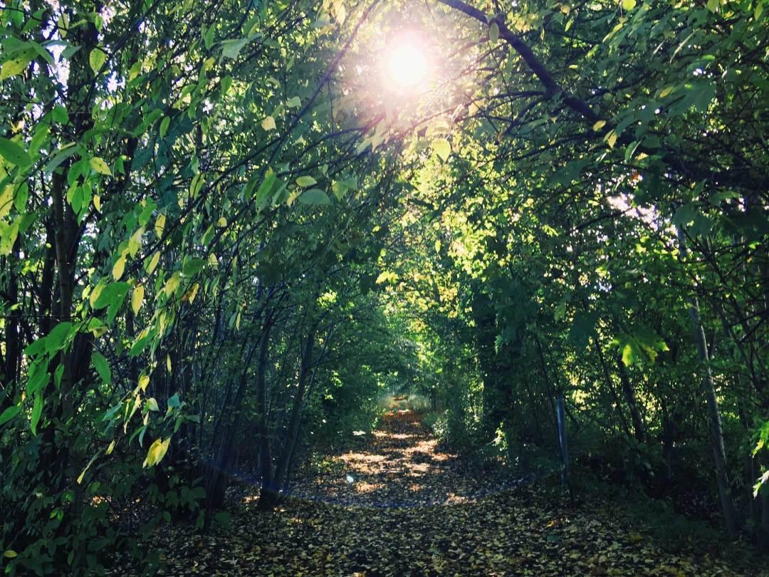 sunshine-trees-autumn