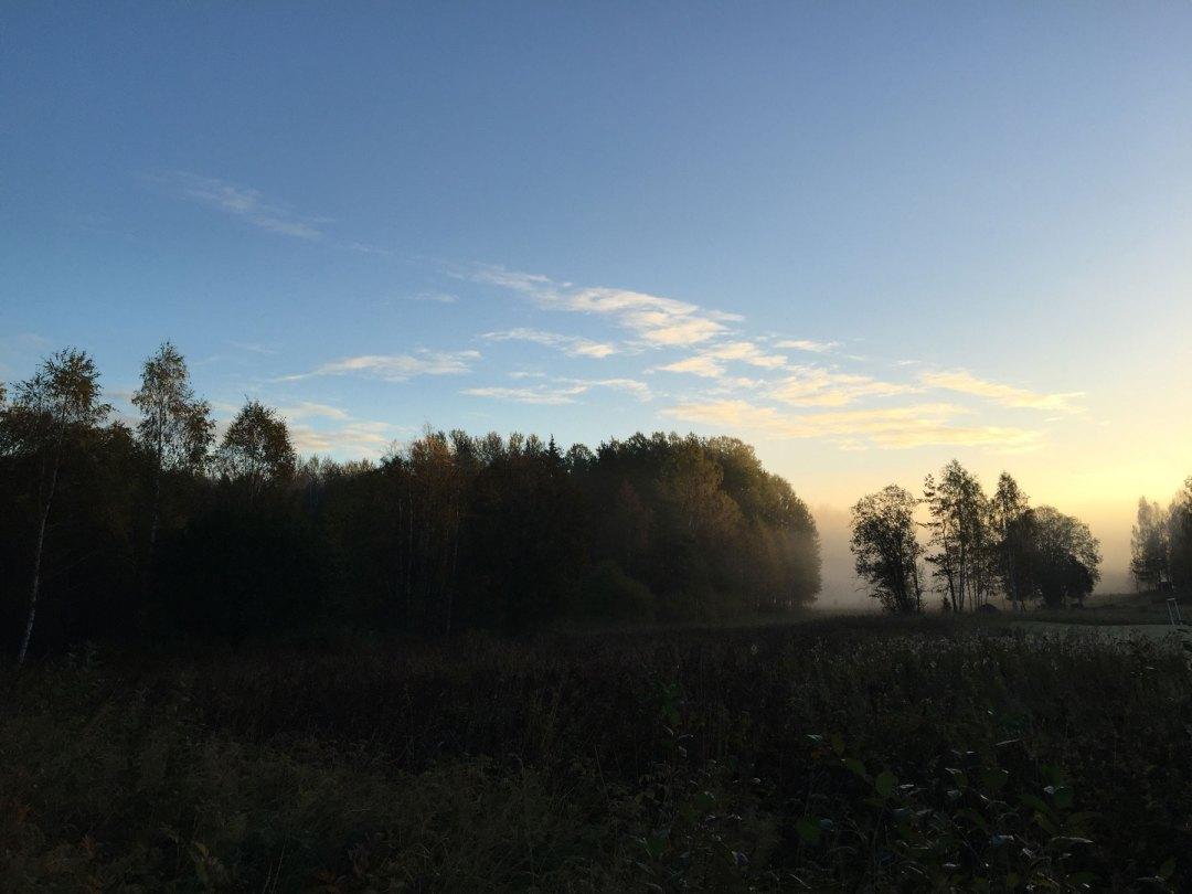 fog-trees-morning-surahammar-life-coach