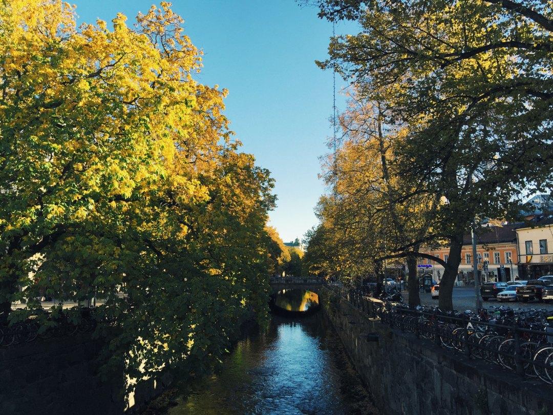 river-autumn-trees