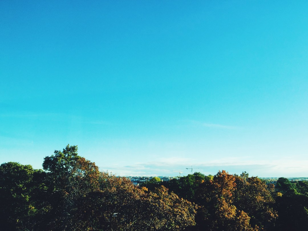 uppsala-trees-sky