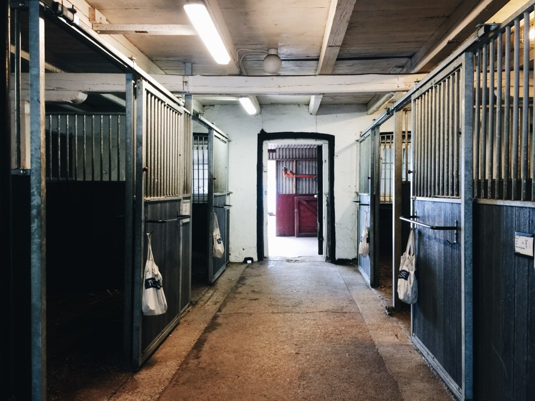 horses stables work