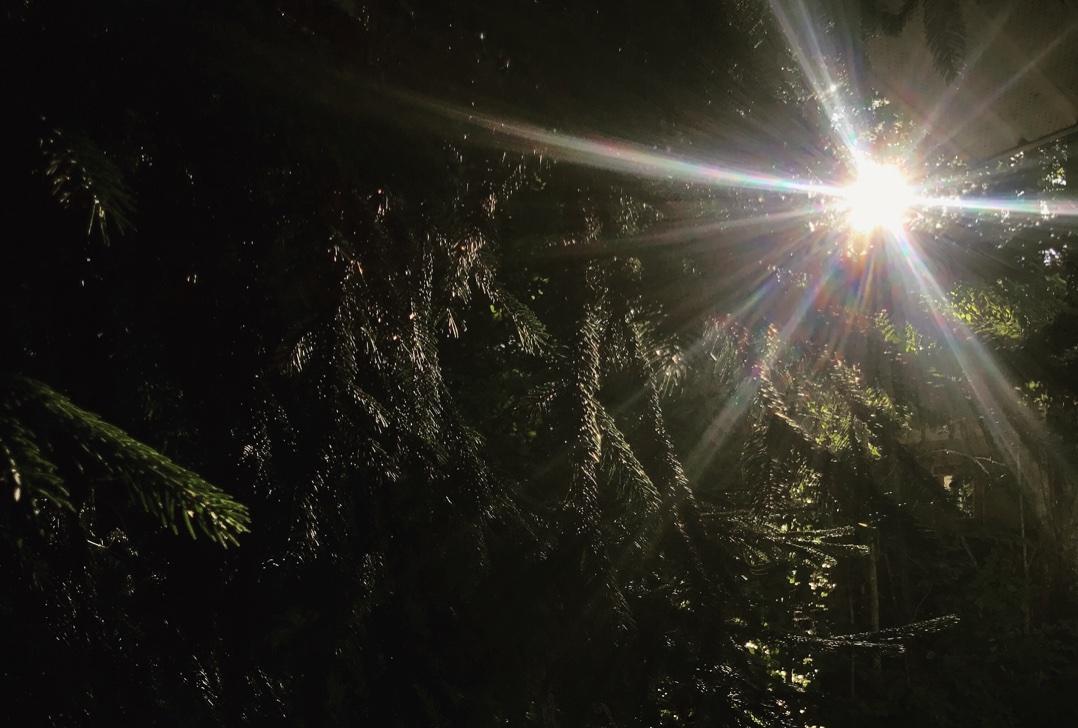 solstice sunshine trees aligned