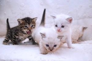Lulu's kittens