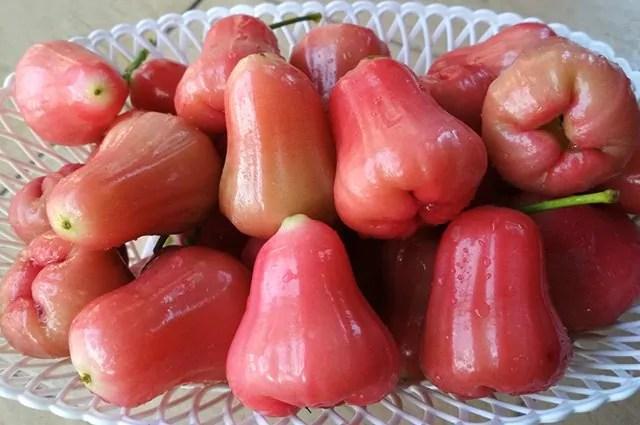 10 frutas laxantes para soltar o intestino apk mod