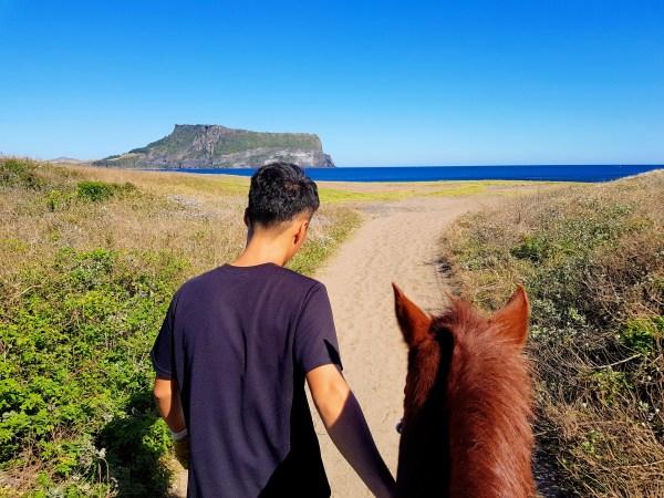 jeju horse