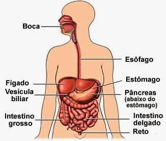 Ficha de Trabalho – O Sistema Digestivo (3)