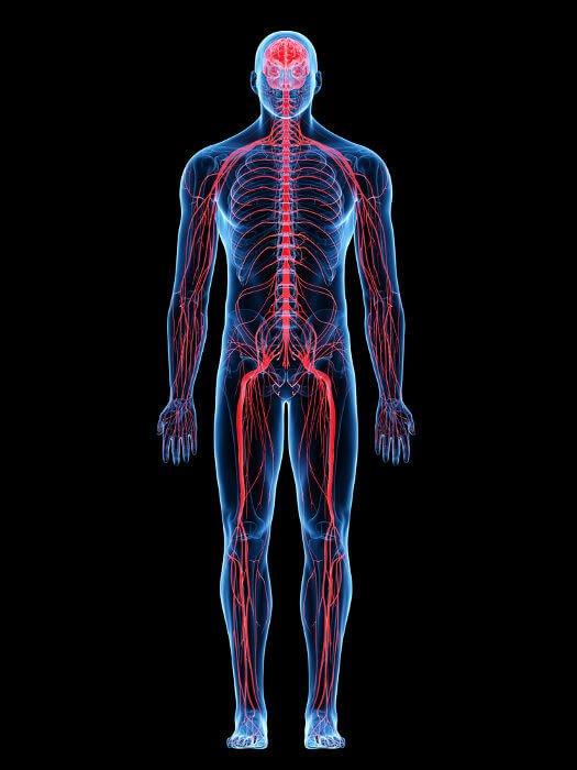Ficha de Trabalho – O Sistema Nervoso (3)