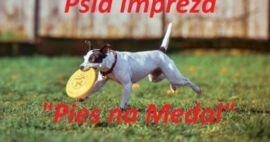 """Pies na Medal"""