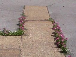 bloomwhereyoureplanted2