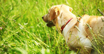 Can I Give My Dog Benadryl | Knowing When To Give A Dog Benadryl