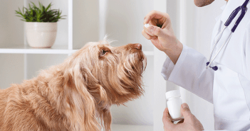 Benadryl For Dogs Knowing When Benadryl For Dogs Is The