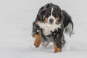 liquid benadryl for dogs dosage