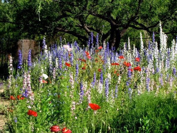 border flowers flower