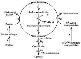 Methionine, SAMe, Homocysteine, and the Methionine Cycle