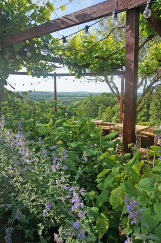 Benchandlergardendesign - VINES - VIEW1