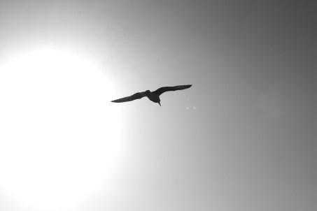 Bird Flying by Sun on Brighton Coast
