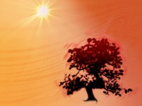 wallpaper-bonsai-autumn2