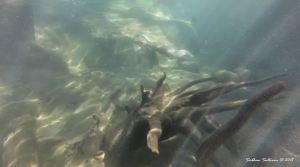 OtterUnderwater C