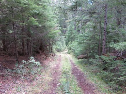 A remnant of the Santiam Wagon Road