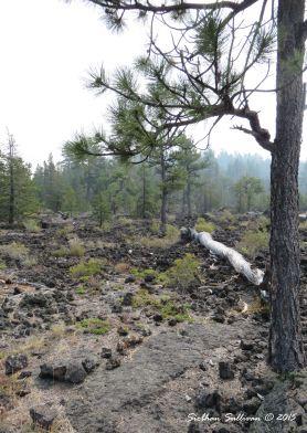Lava Cast Forest, Oregon