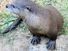 OttersFeet C