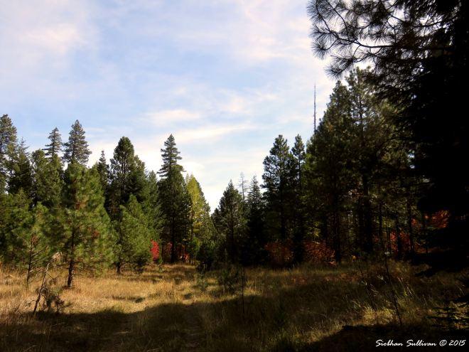 MetoliusPreserve Forest