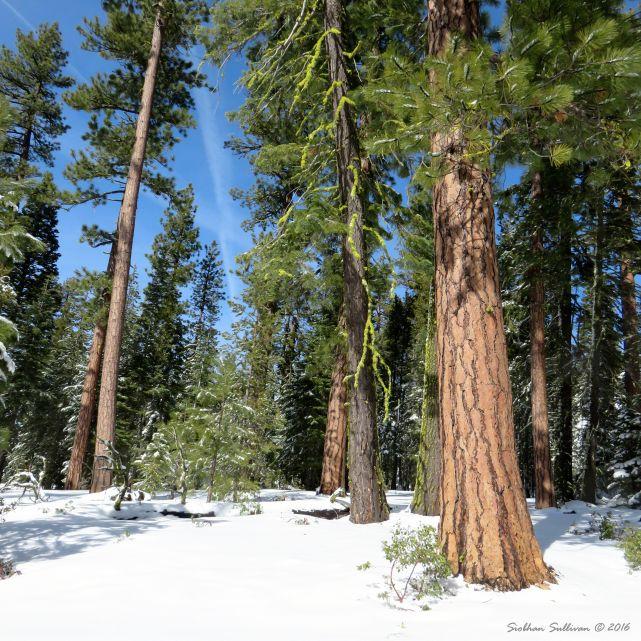 Winter sights near Paulina Lake