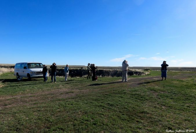 Malheur Birdwatchers